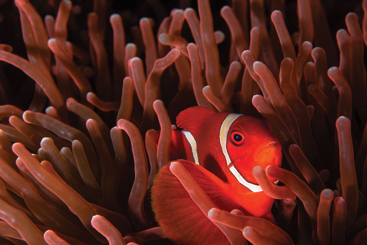Photo of coral reef fish
